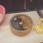 猫ちゃんお休み中