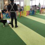 大型犬限定のパピーパーティーを開催しました!