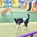 大型犬のパピーパーティーを開催しました🐩
