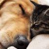 大切な家族の眠りの時に…