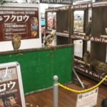 NICOPET久喜菖蒲店週末イベントのご案内
