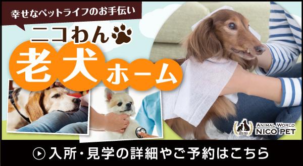 ニコペット久喜菖蒲店 老犬ホーム