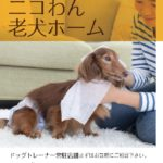 『老犬介護』のお手伝いをさせて頂きます