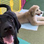 大型犬のパピー教室を開催いたしました!