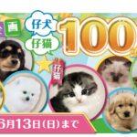 ニコペット久喜菖蒲店:週末イベントご紹介