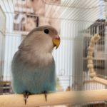 🐣鳥さんのペレット&シード試食会🐣